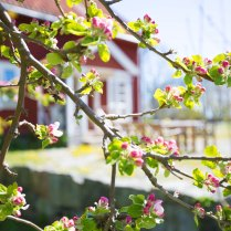 Lilla Sörgården, Sommarpensionat